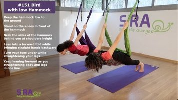 Bird with low Hammock – exercise #151